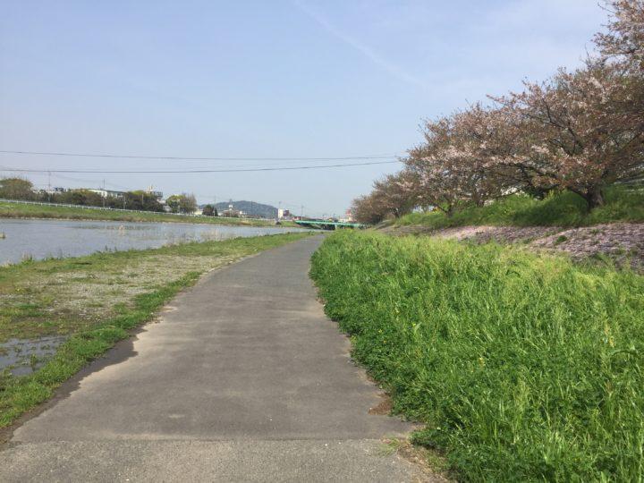 今川沿いをサイクリング