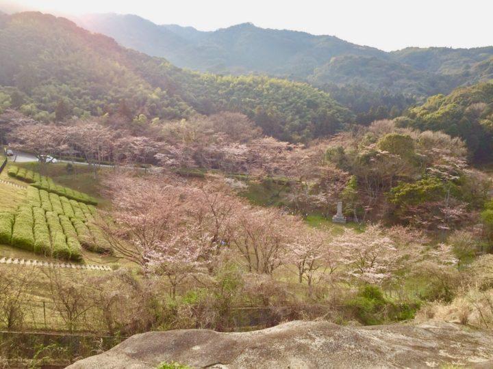 花見サイクリングは昭和池
