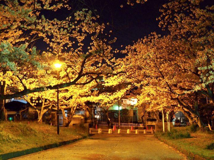 安部山公園の夜桜を見てきた