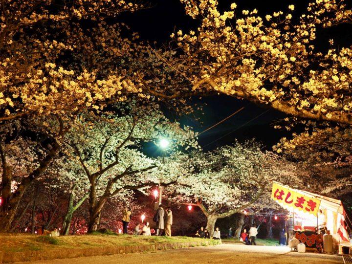 安部山公園の夜桜