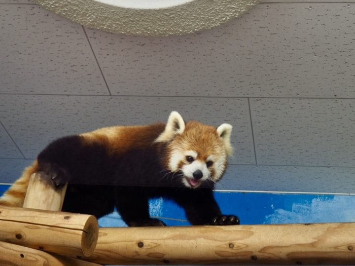 福岡市動物園に行ってきました