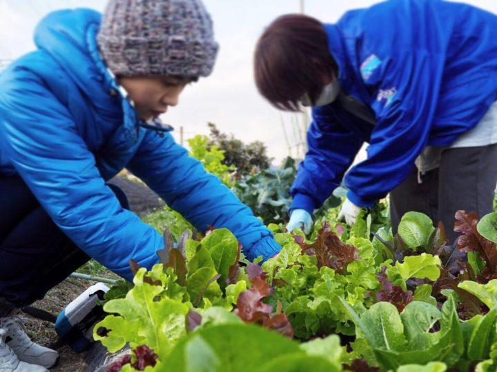 平山ファームへ野菜の収穫に