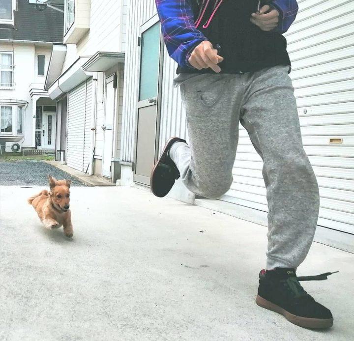 猟犬の本能