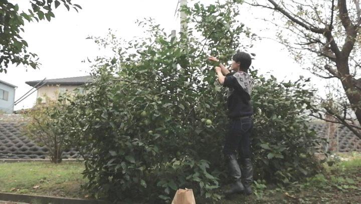 レモン狩り