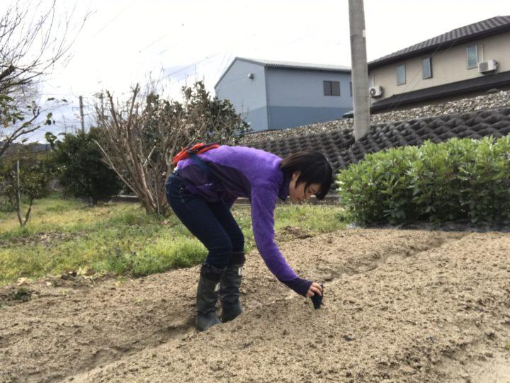 家庭菜園記録