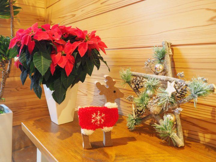 店内クリスマスモードです